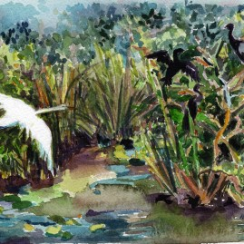 Great Egret and Anhingas in Habitat